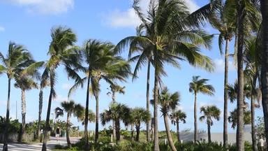 ヤシの木のあるマイアミ風景